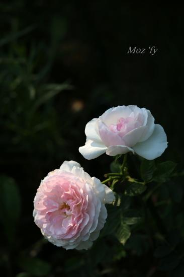 IMG_5863-12.jpg