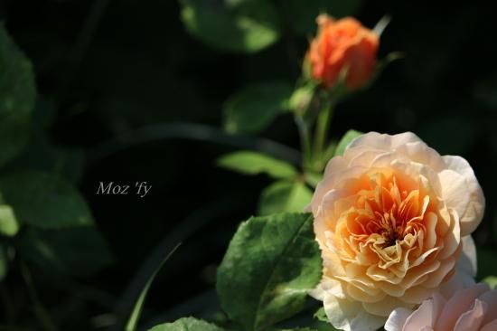 IMG_5894-12.jpg