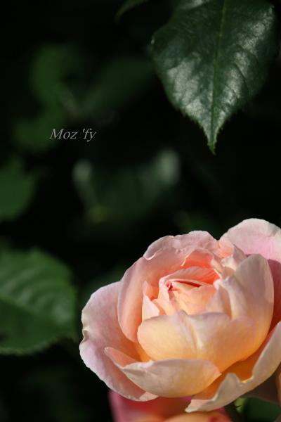 IMG_8735-12.jpg