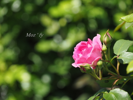 P4280264-12.jpg