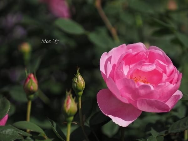 P5060146-12.jpg